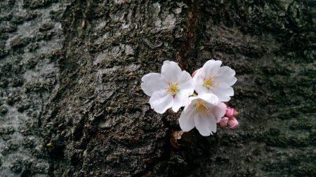しあわせご飯・春の会 Apr.16.Tue.